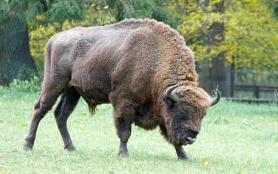 Bialowieza National Park tour from Warsaw